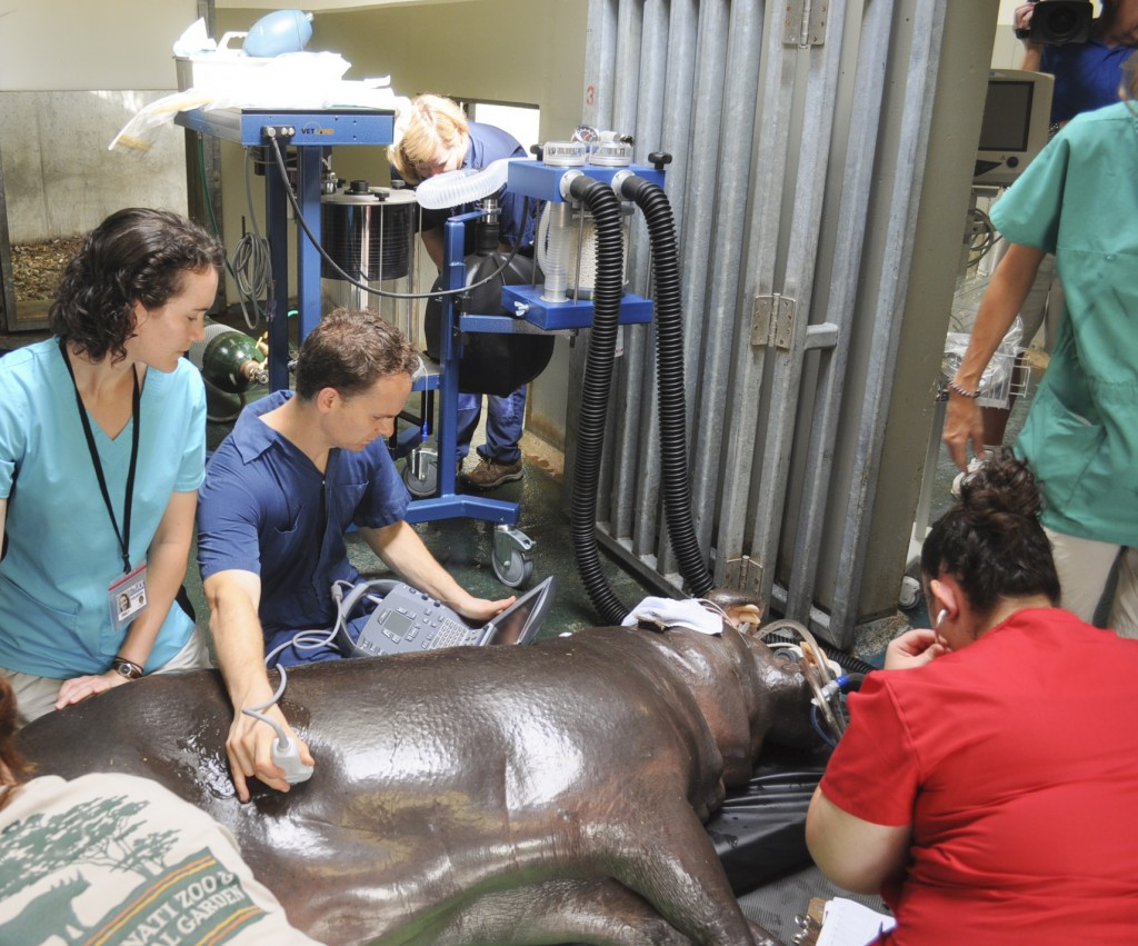 Hippo Anesthesia Procedure